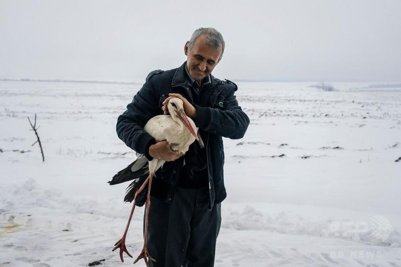 寒くて飛べず…凍えたコウノトリを住民らが自宅で保護 ブルガリア