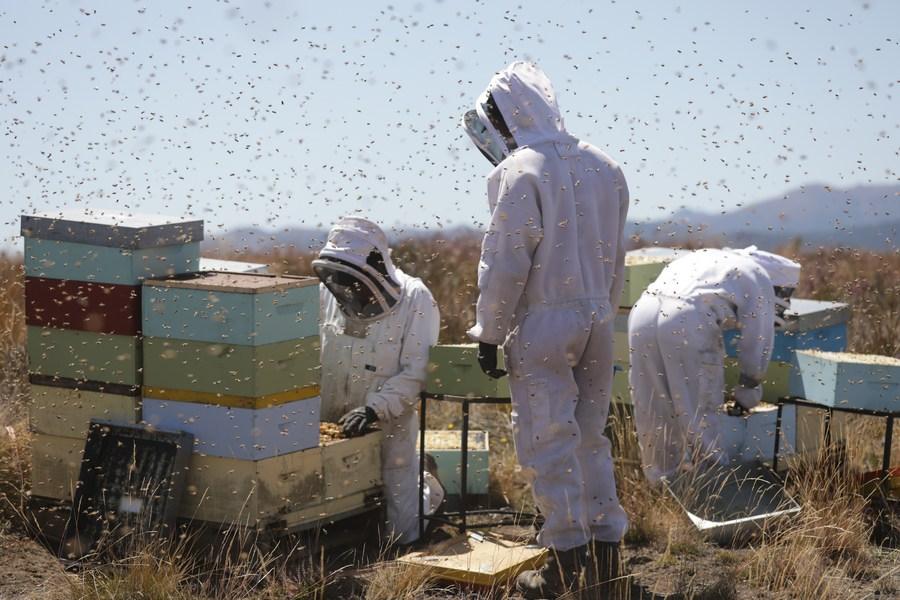 ニュージーランドのハチミツ輸出量、自然食品の需要で増加