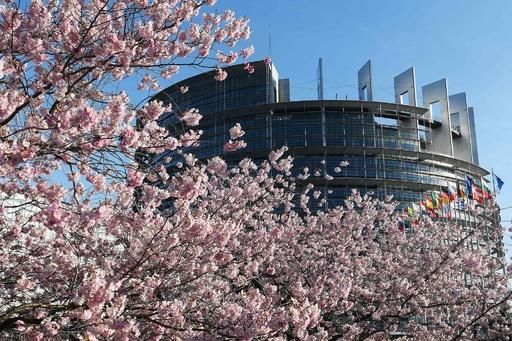 見頃を迎えた欧州議会の桜、仏東部