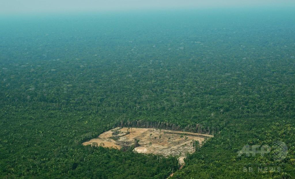 世界の原生林、縮小のペース加速 研究発表