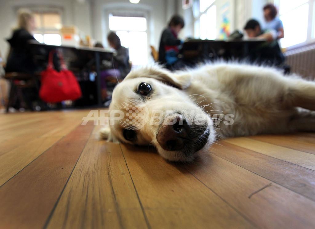 生徒のやる気を引き出す「学習補助犬」、ドイツで導入進む