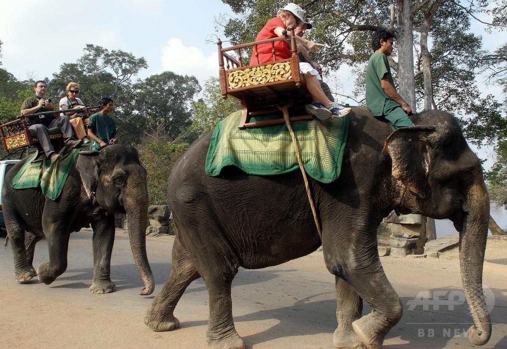 観光客乗せたゾウ、「熱中症」で死ぬ カンボジア