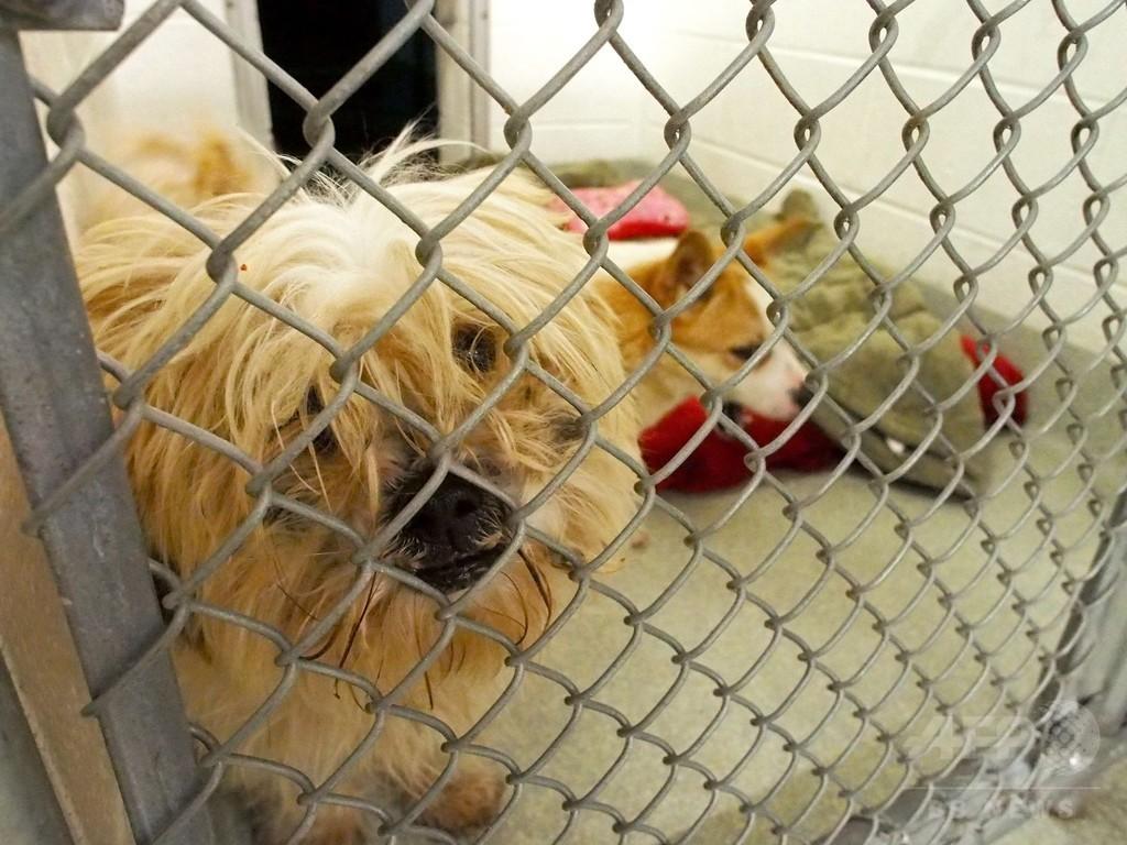 【わんわんおの写真あり】韓国の食用犬がどう見ても愛玩種な件 23匹を救出しアメリカへ移送