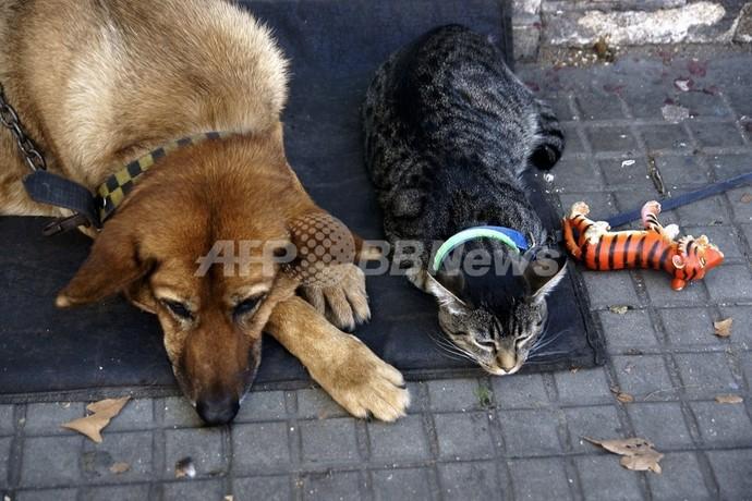 瀕死のネコ、イヌから輸血で命助かる ニュージーランド