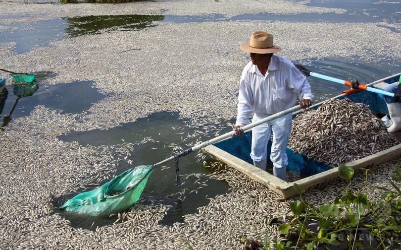 メキシコ潟湖の魚大量死、下水処理場が原因と州当局