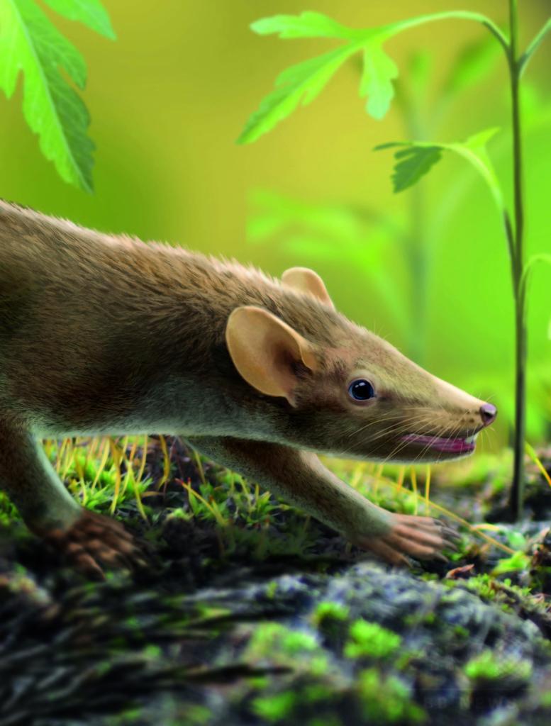 1億2500万年前の哺乳類化石に体毛、白癬の痕跡も 研究