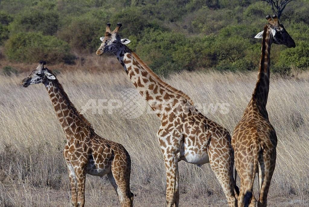 ワキウリさんがケニアで再びマラソンに挑戦、「引き金」は環境問題