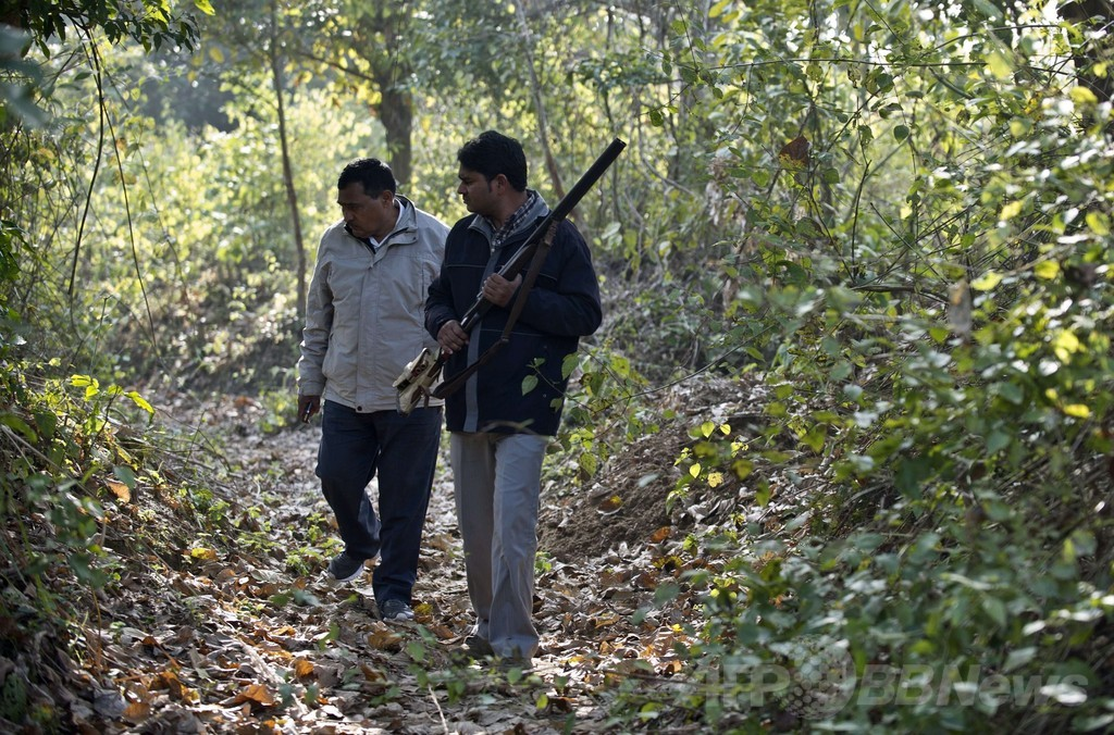 「人食いトラ」の犠牲者9人目、インド北部