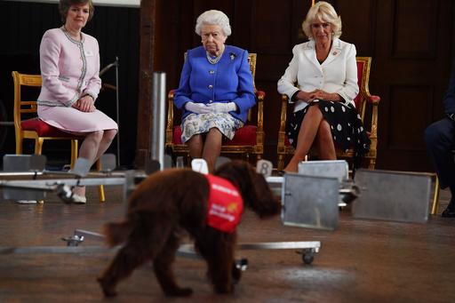 「新型コロナ探知犬」誕生なるか、英慈善団体が調査へ