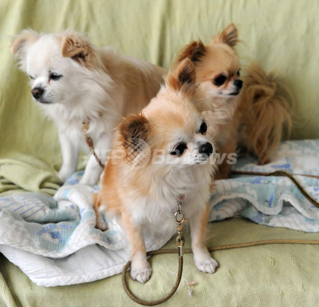 急げ、被災ペットと飼い主の救援 「ぼくたちも懸命に生きてます」