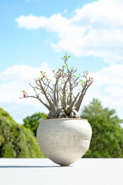 「ウルトラ植物博覧会」が銀座にカムバック
