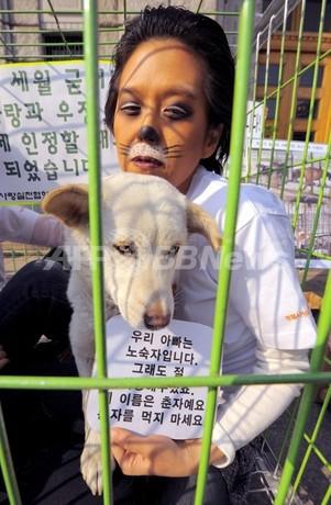 ソウル市、犬を食用家畜に分類する方針示す