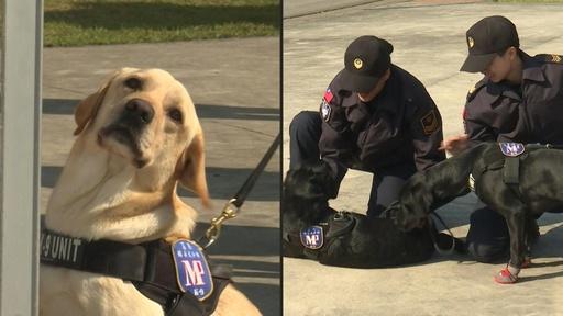 動画:任務頑張ります! 麻薬探知犬3匹お披露目 台湾