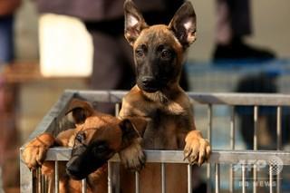 道端で犬を見かけ食べたくなった… 飼い犬殺した男を拘束 内モンゴル