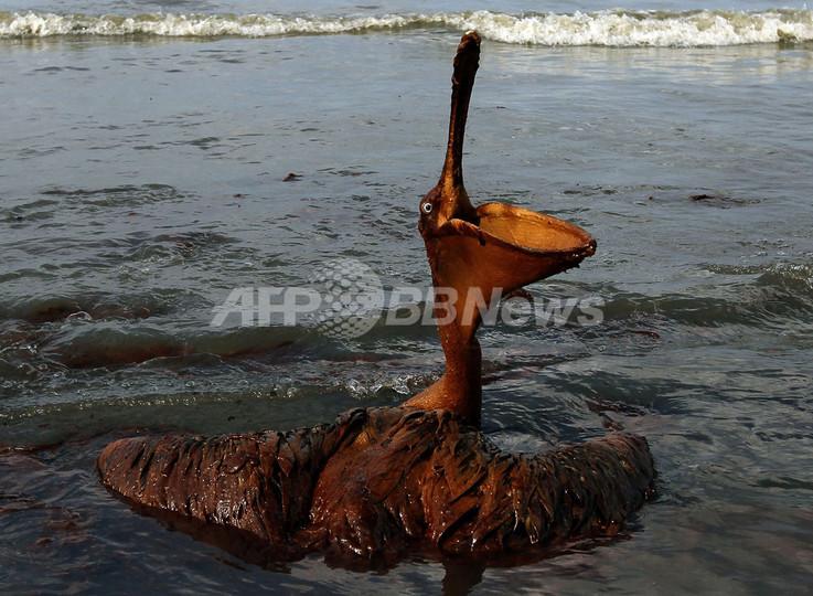 メキシコ湾原油流出事故、17か月...