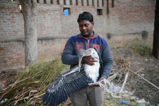 たこ糸で鳥150羽超死ぬ、インドの祭りのたこ合戦で 数百羽けが