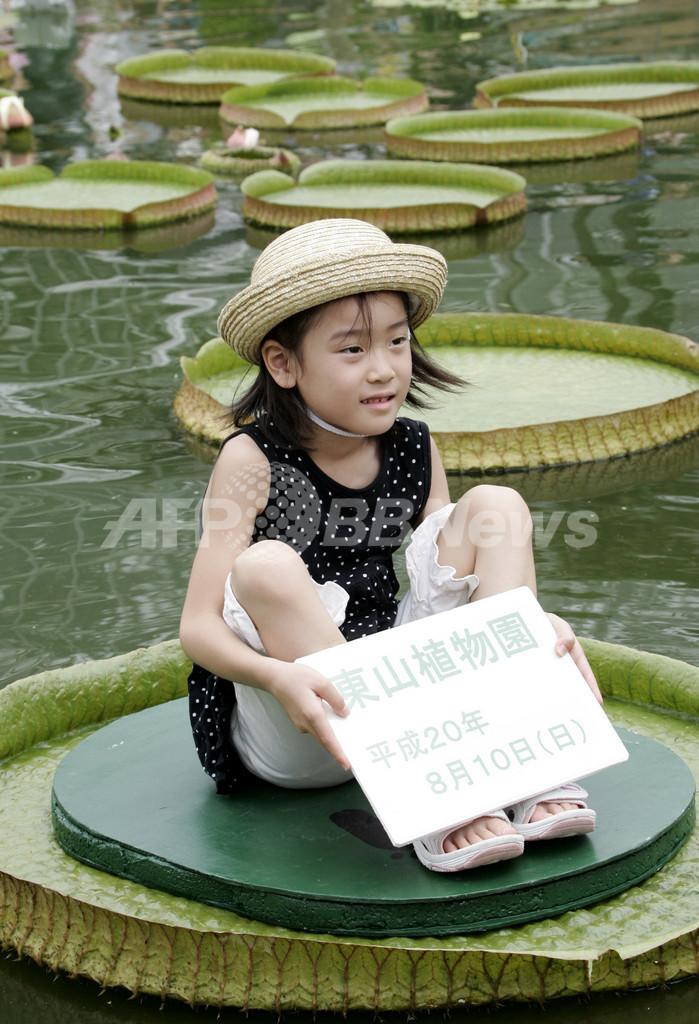 水に浮く大きな葉に乗ろう、東山動植物園で子ども向け夏休み企画