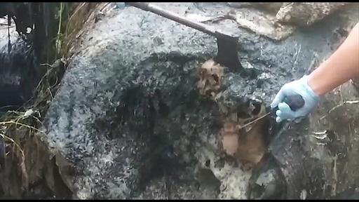 動画:頭部切断、牙奪われたスマトラゾウの死骸発見 インドネシア