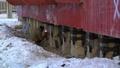 動画:温暖化で溶ける永久凍土 建物不安定に、有害物質放出の恐れも シベリア