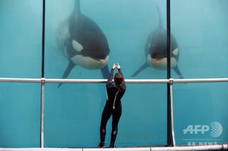 英旅行大手トーマス・クック、シャチ飼育施設へのツアー中止へ