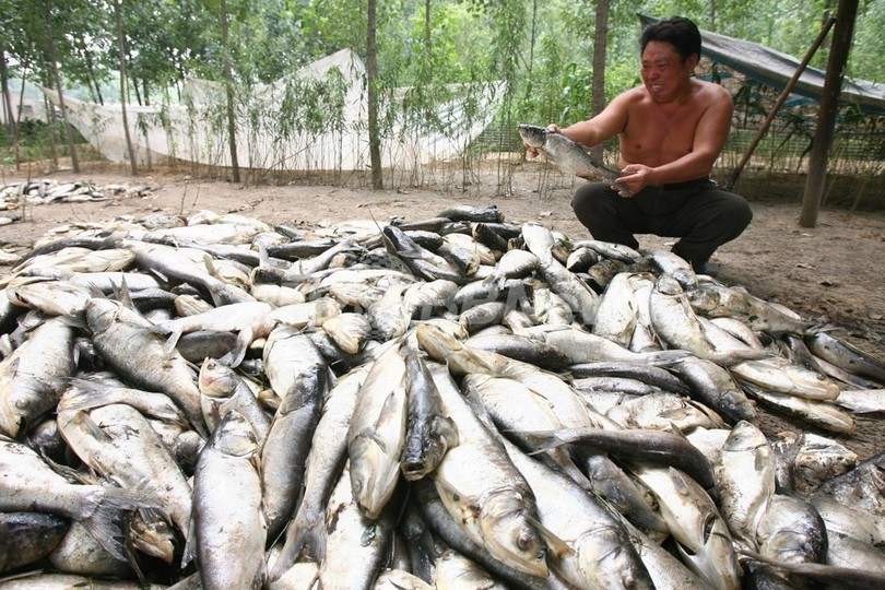 化学工場そばの川で魚15トンが大量死 中国