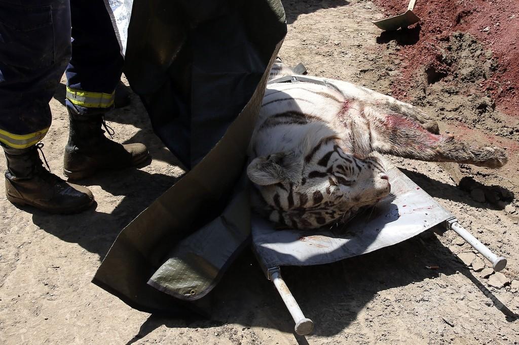 逃走トラに襲われ男性死亡、洪水被害のジョージア