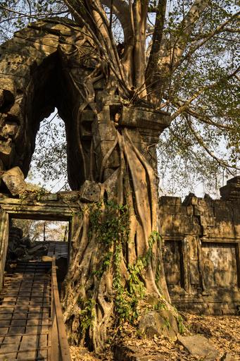 カンボジアの失われた都市、レーザー技術で詳細明らかに