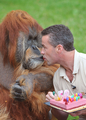 50歳の誕生日にケーキほおばる、オランウータンの「メジャー」