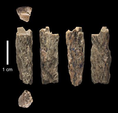 初期人類デニソワ人、首飾りなど装身具を製作か 研究