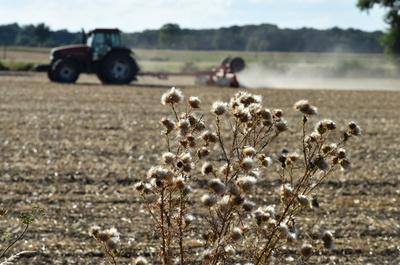 「牧草がない」 猛暑による干ばつで悲鳴、欧州畜産業