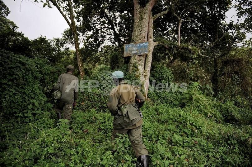 世界遺産のヴィルンガ国立公園、兵士に殺される動物たち コンゴ