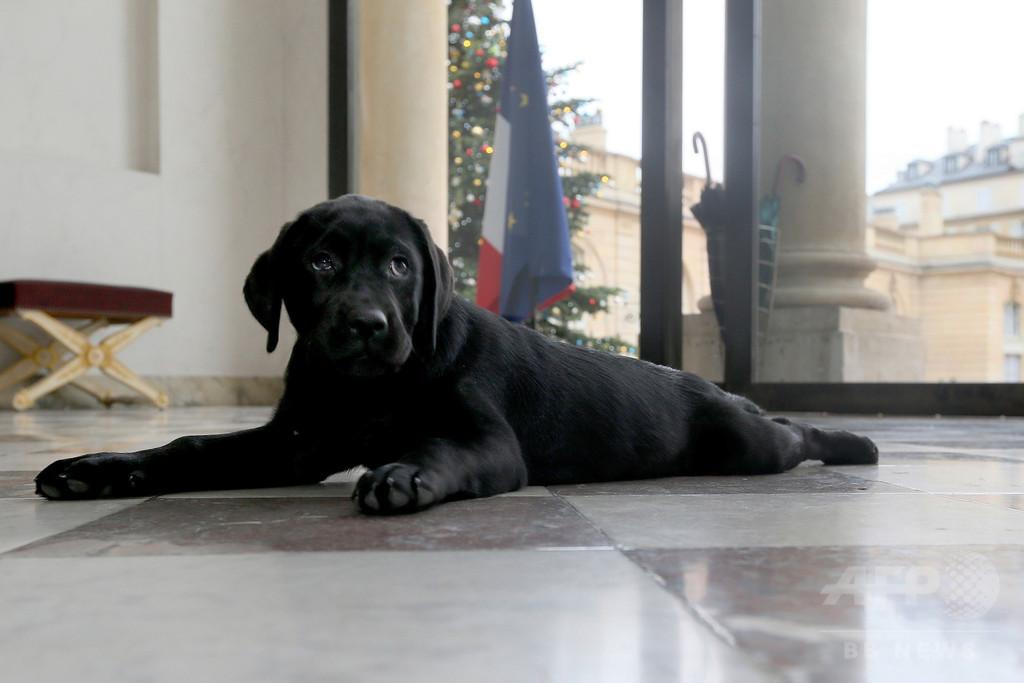 仏大統領にかわいいクリスマス・プレゼント、子犬の「フィラエ」