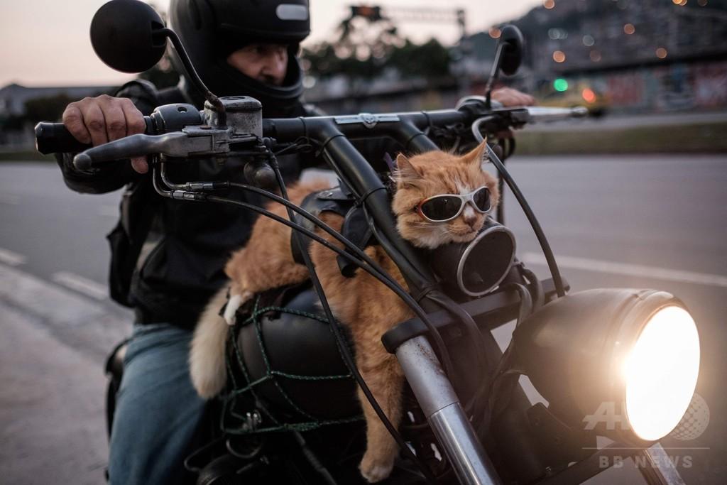 飼い主とずっと一緒でご満悦? リオの「バイク乗りネコ」