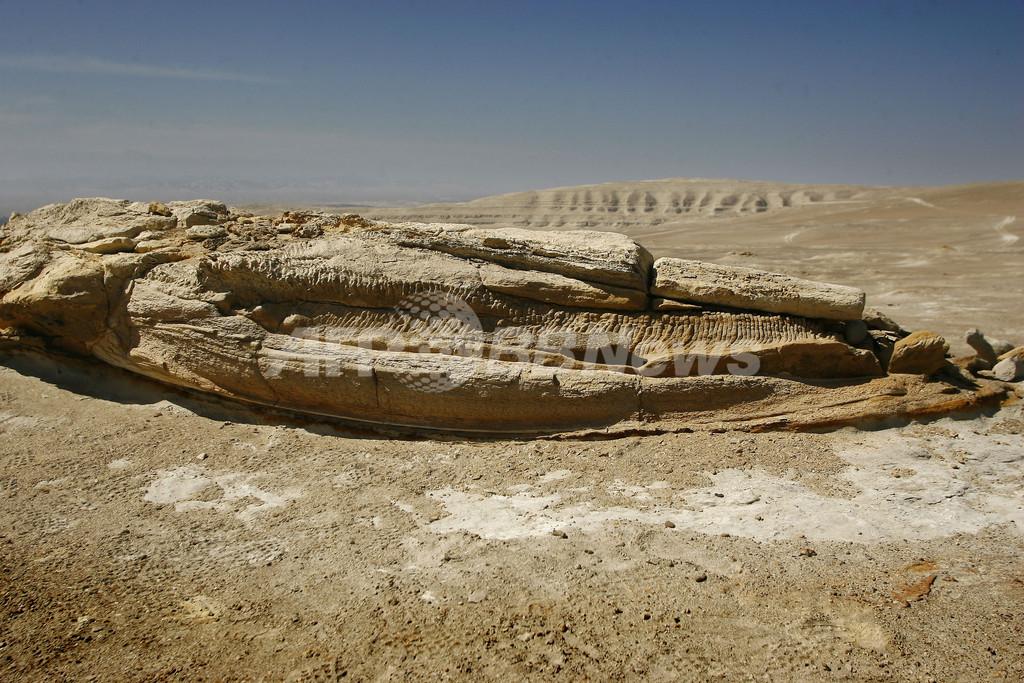 ダカールラリーが2000万年前の化石を破壊、研究者らルート変更要求