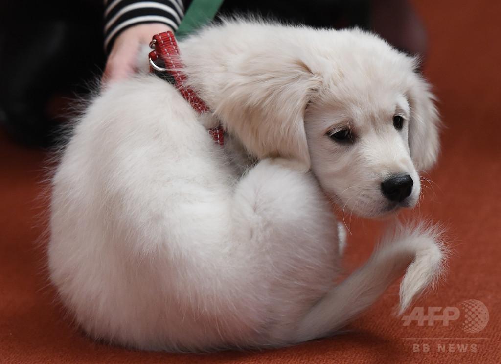 ヘロインの「運び屋」はペットの子犬、獣医師を逮捕 スペイン