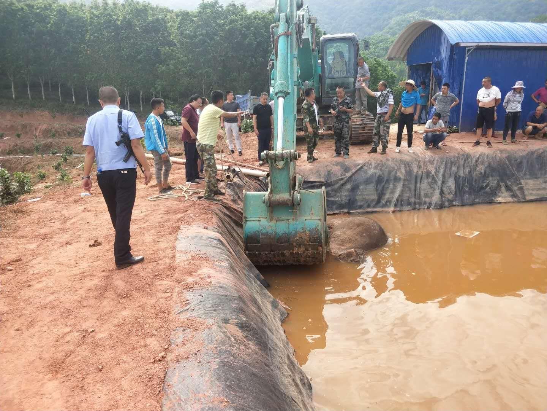 野生のゾウ3頭が貯水池に転落、1頭死ぬ 雲南省