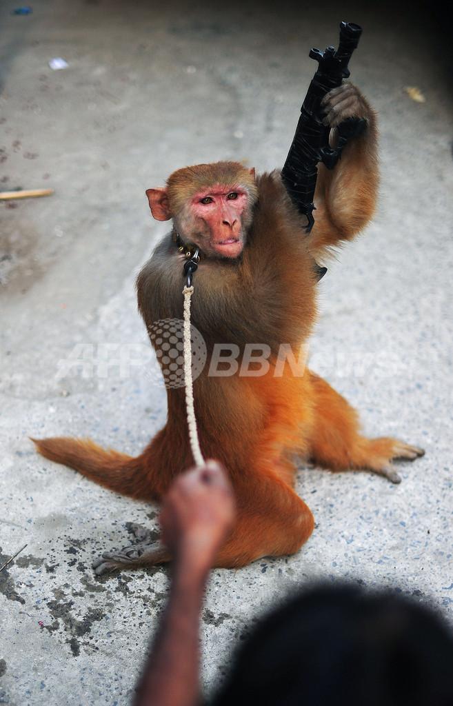 路上で行われる違法な動物の見せ物、パキスタン