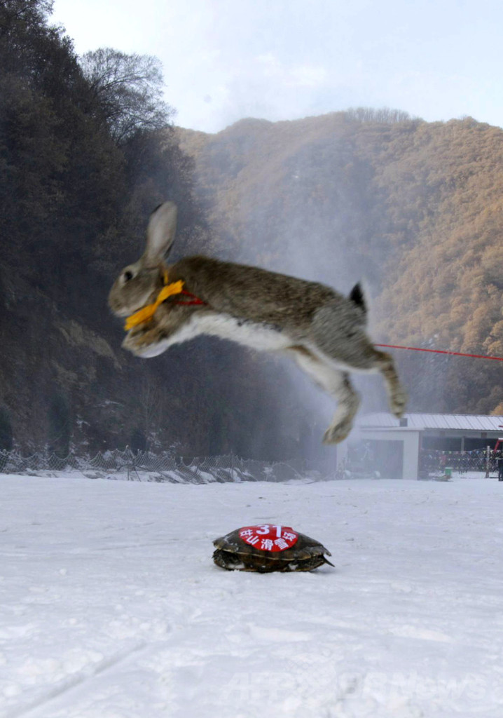 ペットのスキー大会でカメがウサギに勝つ、中国