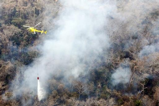 森林火災で野生動物230万匹超が焼死、南米ボリビア