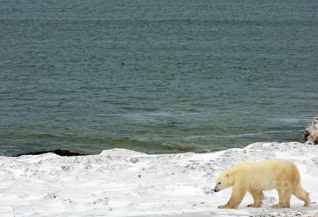 北極圏の海底から謎の音、動物も消えた? カナダ軍が調査へ