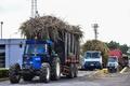 産業と再生可能エネルギーをもたらすサトウキビ、モーリシャス