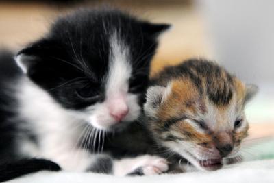 夫の愛人のネコを盗んだ英国議員の妻に有罪の認定
