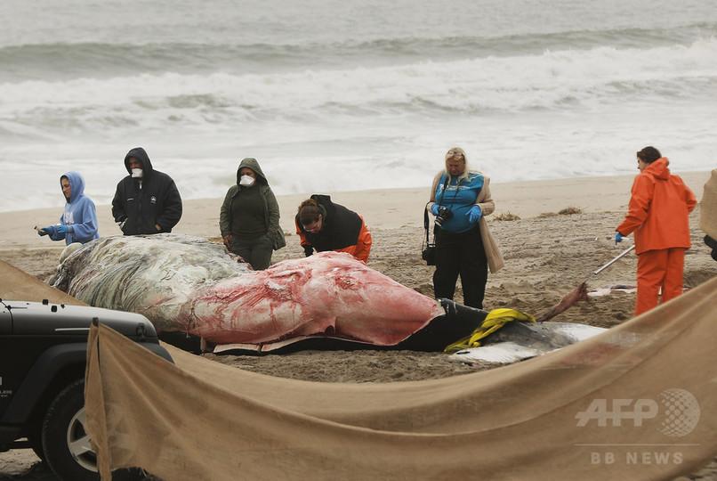 ザトウクジラの「異常な大量死事象」 米大西洋沿岸で調査