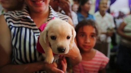動画:愛犬の健康祈う、「聖ラザロ」の祭り 中米ニカラグア