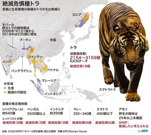 絶滅危機のトラ、6亜種のみ残存 研究で確認