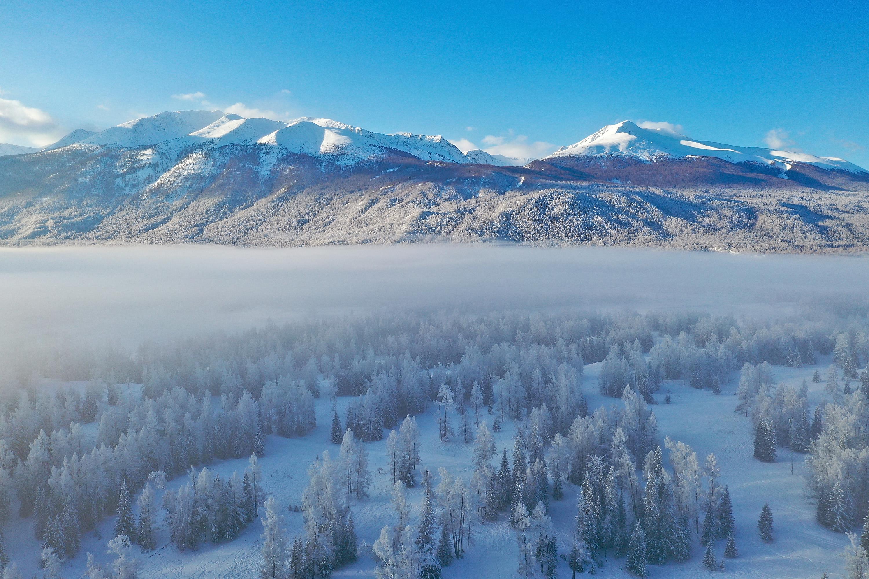 一面の銀世界にうっとり、雪化粧したカナス 中国・新疆ウイグル自治区