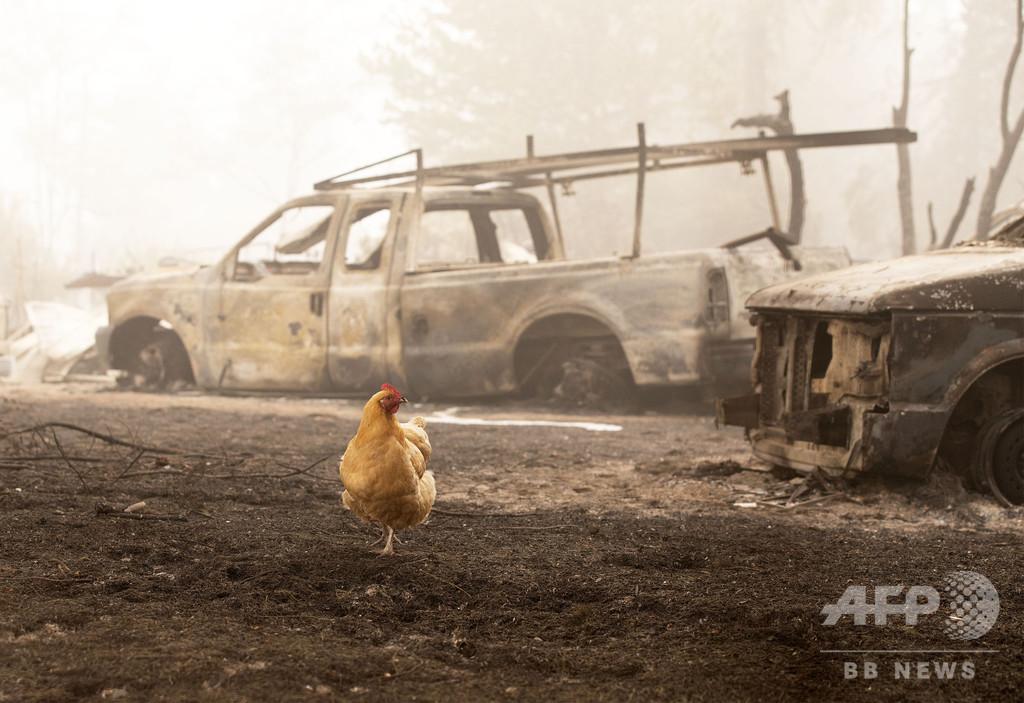 米山火事の死者35人に、トランプ氏が加州訪問へ 気候変動軽視と指摘も