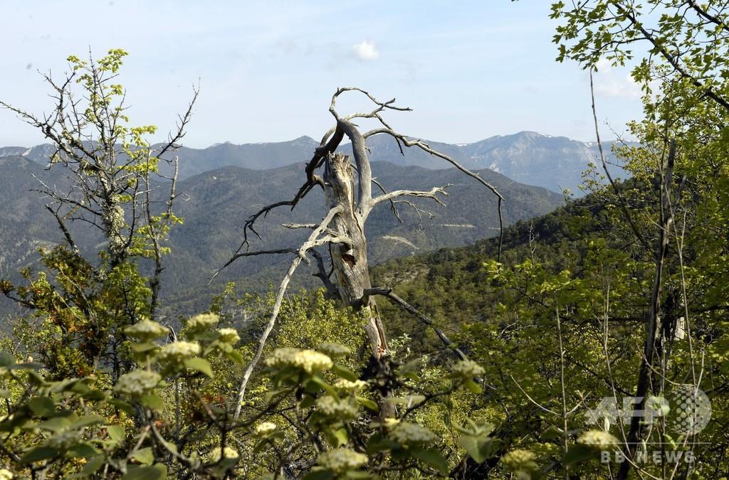 欧州最大級「再野生化」実験、森を手入れせず放任するとどうなる? 仏