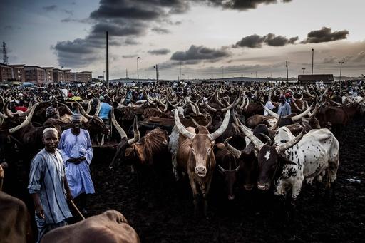 宗教、伝統、生活様式が衝突、「断層線」で生き延びるためにもがく牧畜民フラニ 西アフリカ