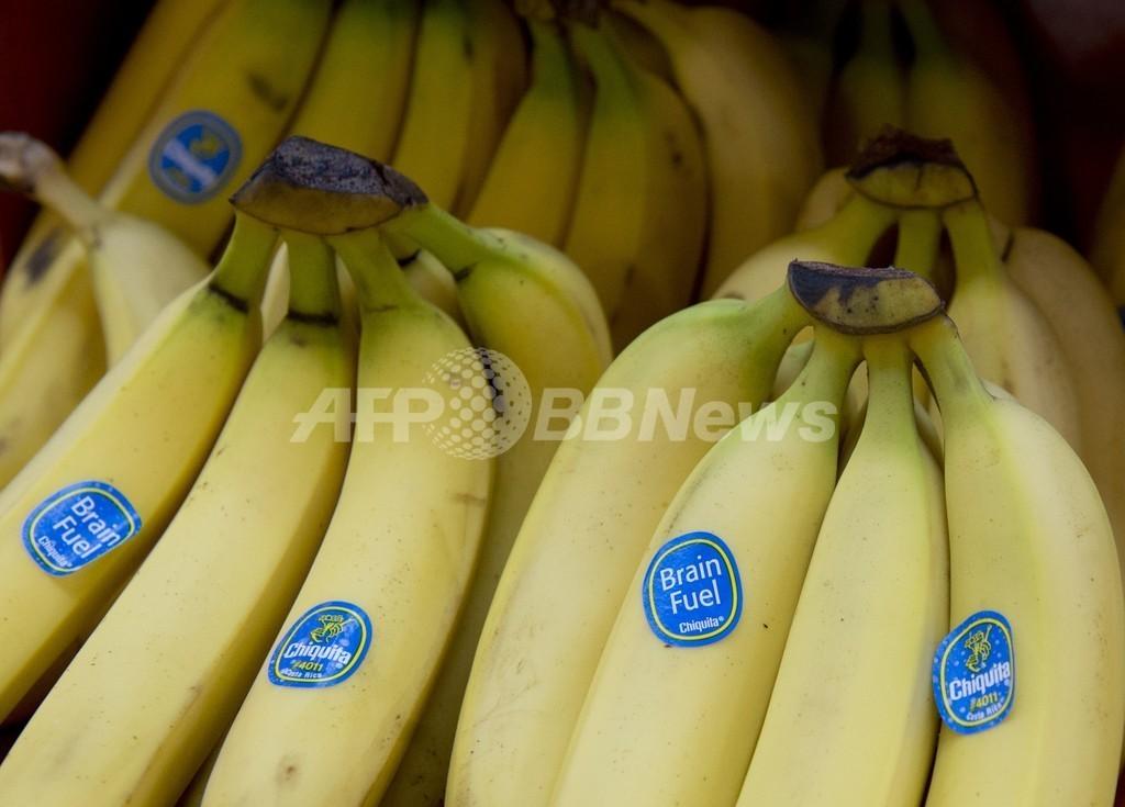 バナナでコカイン密輸、オランダ当局が4人逮捕